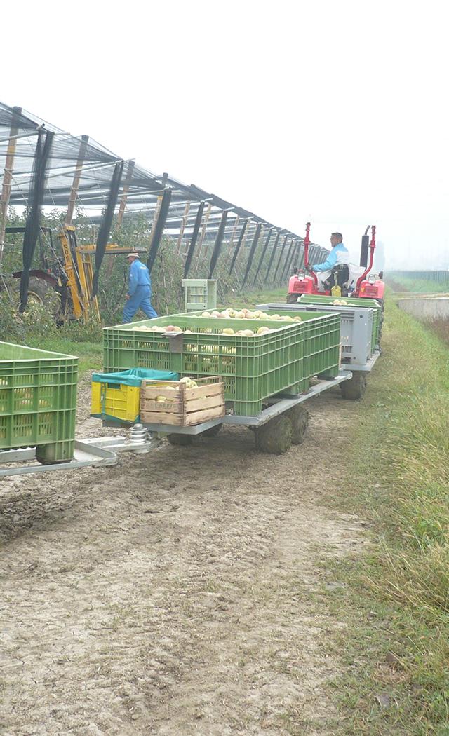 Cesari S.r.l. frutticoltura carrelli in campo